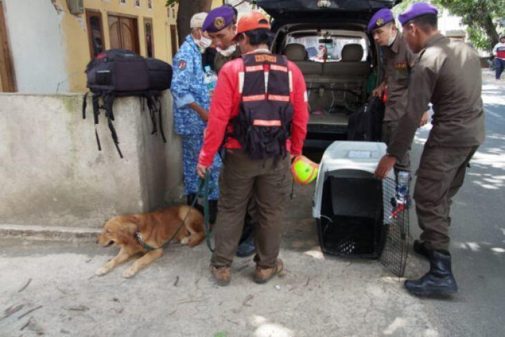 Anjing Pelacak Dikerahkan Cari Korban Gempa Lombok