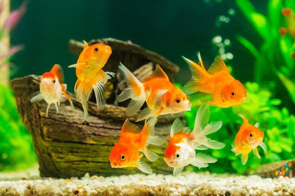 Penasaran Gimana Cara Ikan Tidur? Ini Penjelasannya Ilmiahnya!