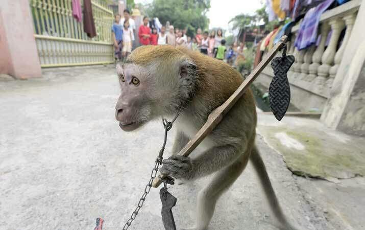 Celana Cewek Ini Dipelorotin Monyet Koplak Pas Lagi Nonton Topeng Monyet...