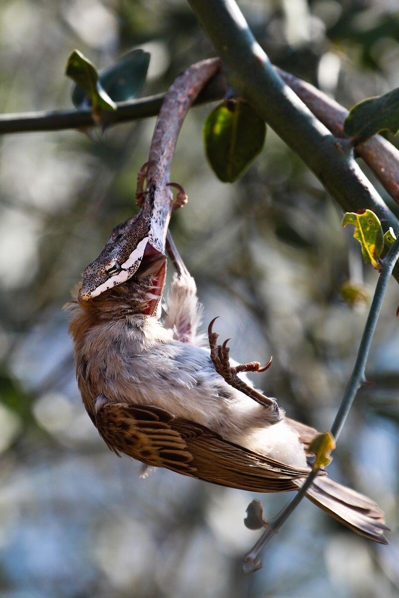 Keren, 11 Foto Hasil Kompetisi British Ecological Society Photography!