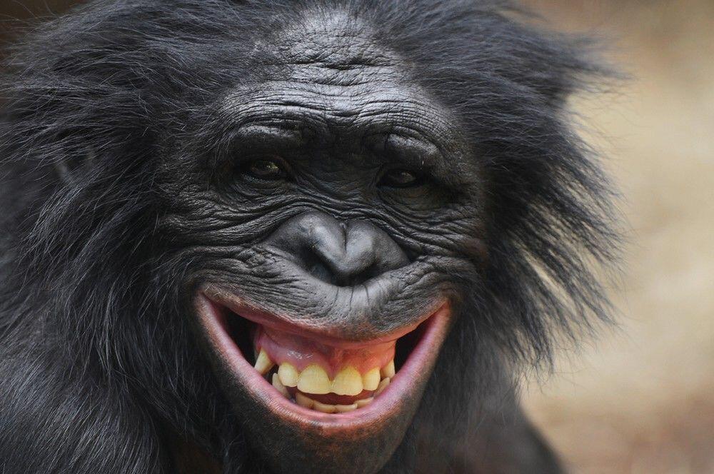 Banyak Orang Baru Tahu 10 Fakta Tentang Hewan-hewan Kebun Binatang Ini