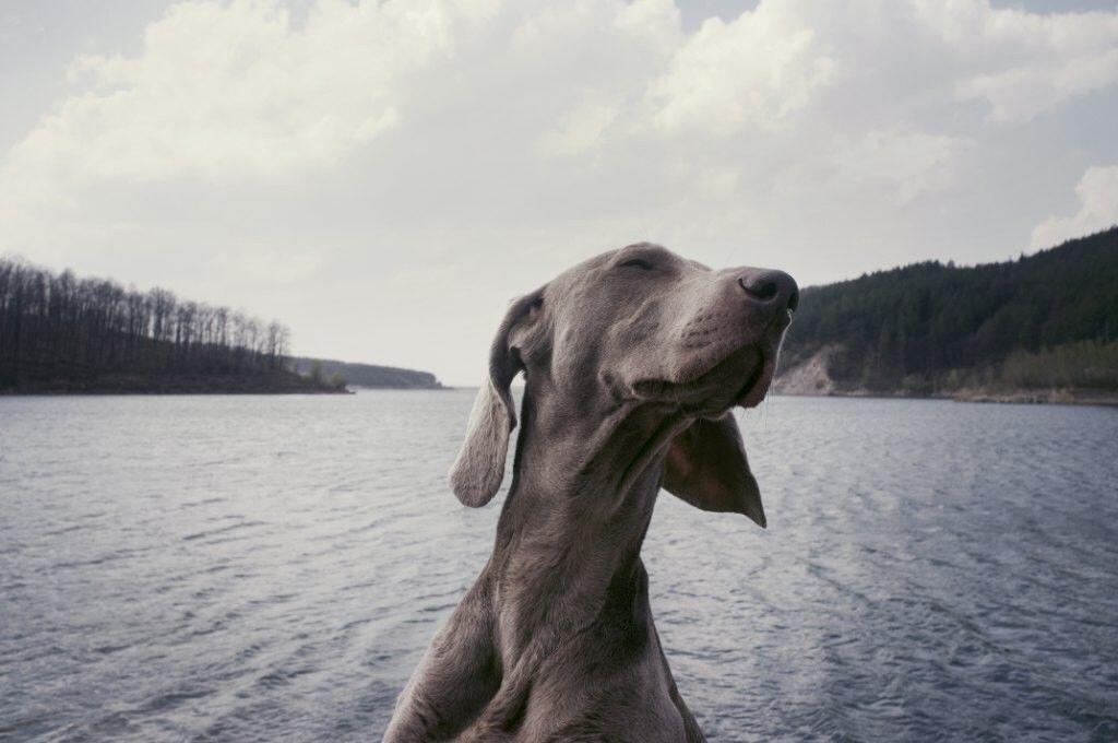 6 Hewan Ini Bisa dengan Peka Mengetahui Akan Terjadi Bencana Alam Lho!