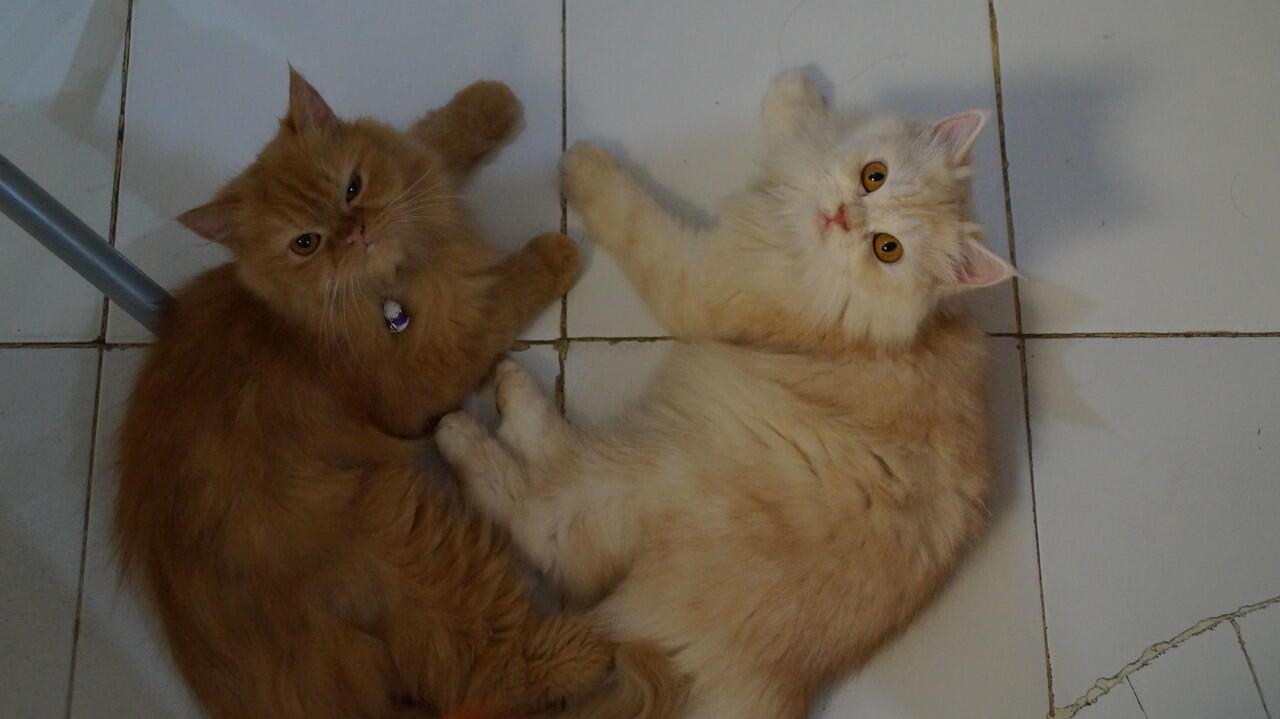 7 Hal Yang Dibenci Kucing Dari Majikannya, Pecinta Kucing Masuk!