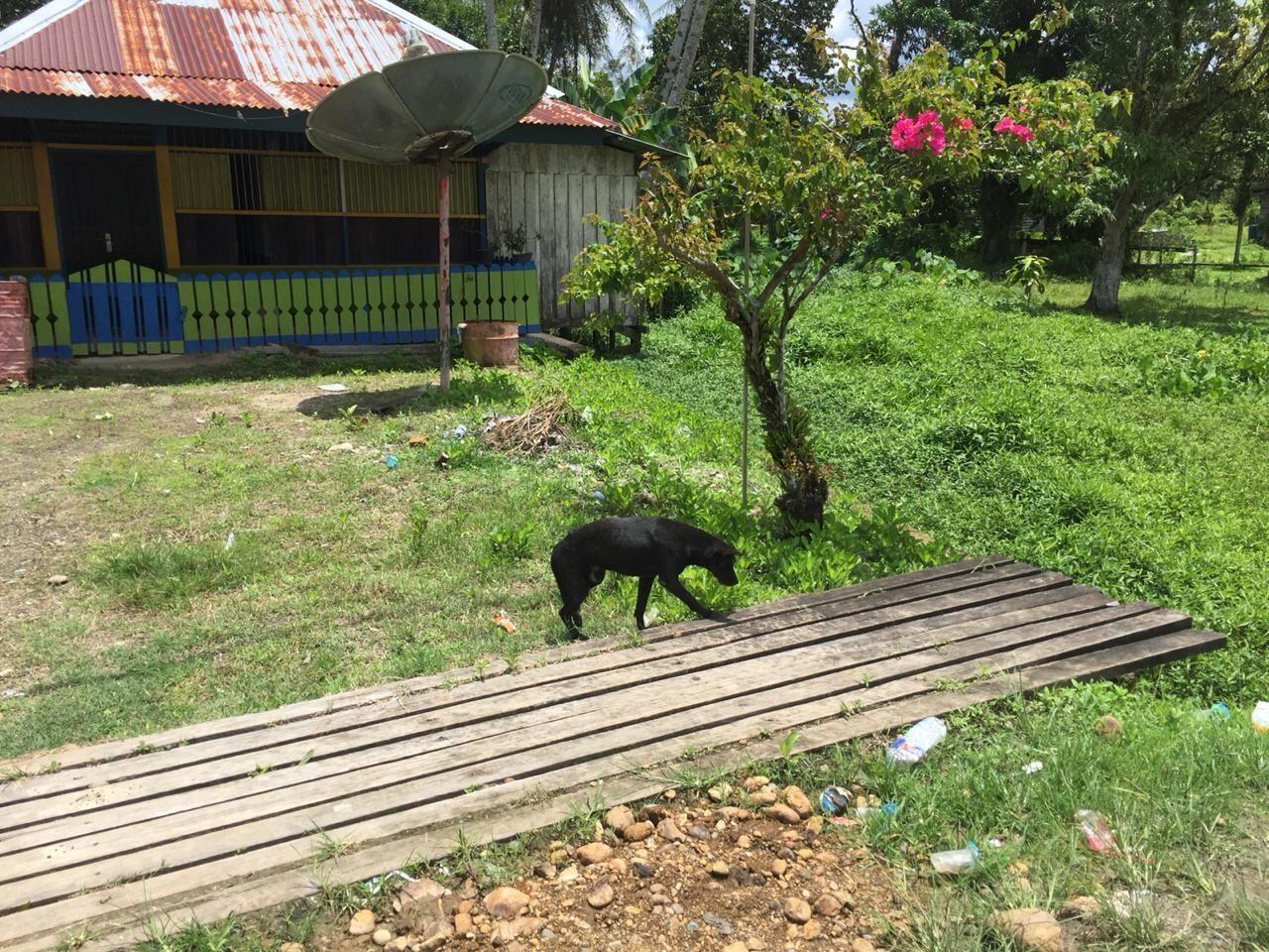 Kisah Inspiratif: Gadis Muda Ini Melawan Rabies di Sorong