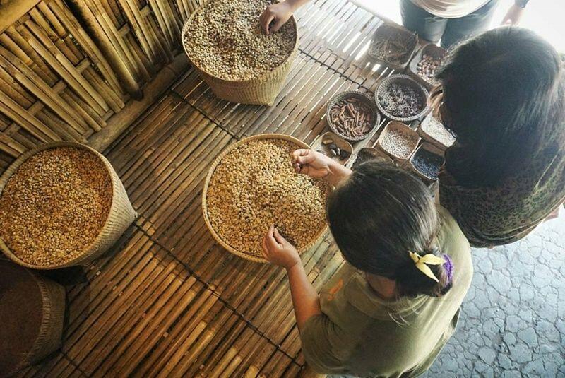 Wisata Bali Pulina, Menikmati Kopi Sambil Memandang Sawah di Gianyar