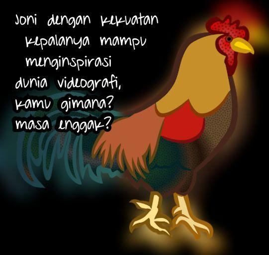Chicken VS Stabilizer ? Amazing, Ternyata Ayam Jago Videography Gan !!