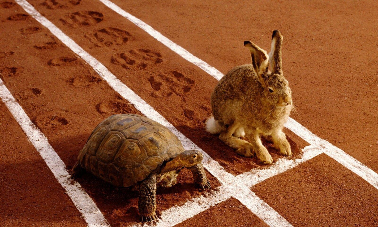 [VIDEO] Balapan Kura-kura & Kelinci, Siapa yang Menang? Ini Buktinya!