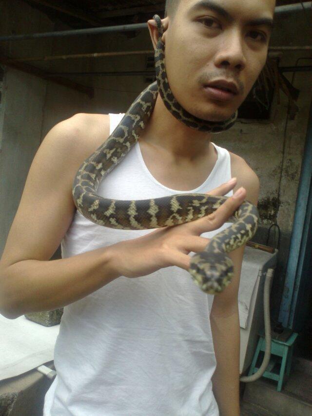 [COC Pets] Reptil Kesayanganku #AslinyaLo