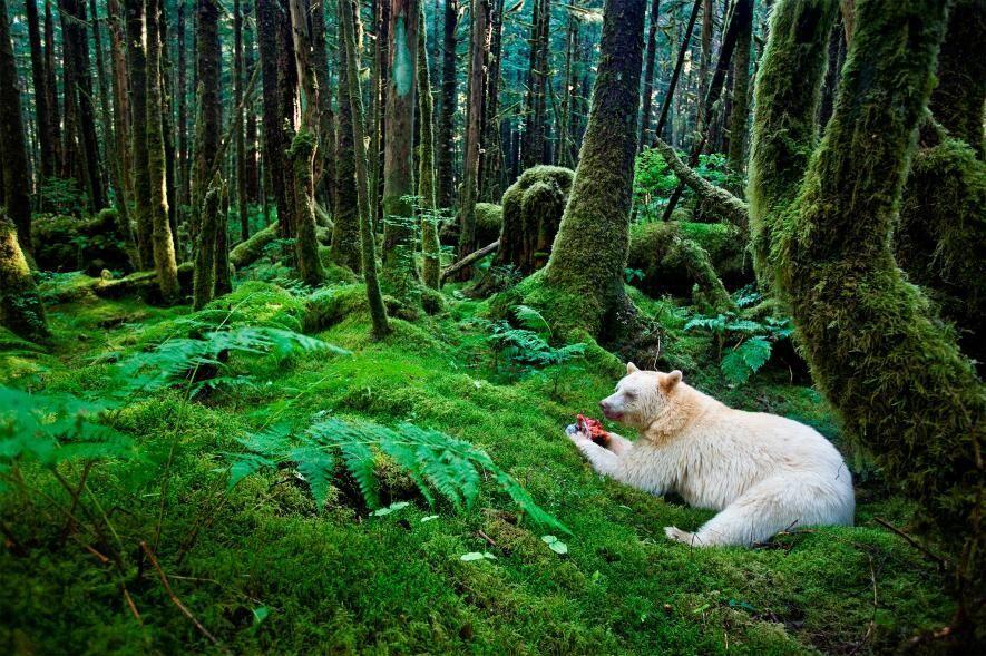 9 Hewan Albino & Leukisme Terlangka di Dunia yang Unik, Pernah Lihat?