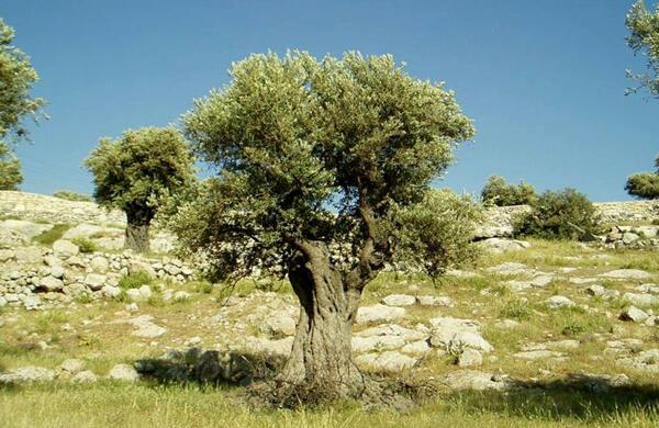 Bisakah Biji yang Tertelan Tumbuh Jadi Pohon? Dalam Kasus Ini Bisa Gan!