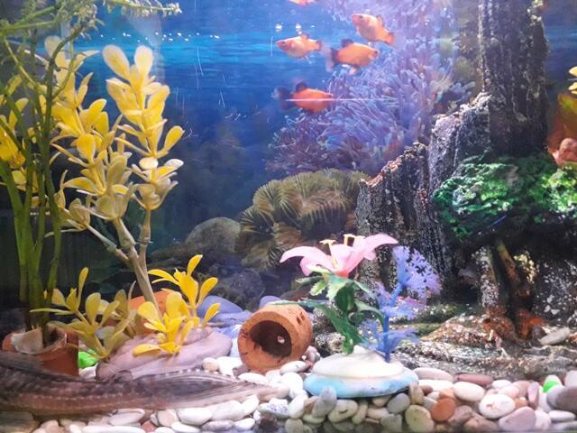 [COC Pets] Tips Perawatan Akuarium Kecil Yang Mengalihkan Duniaku #AslinyaLo