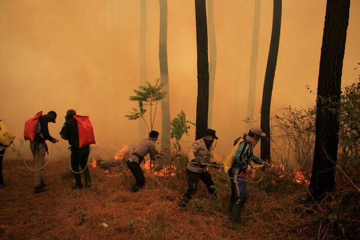 Hutan gunung Ciremai terbakar lagi, kali ini lebih luas
