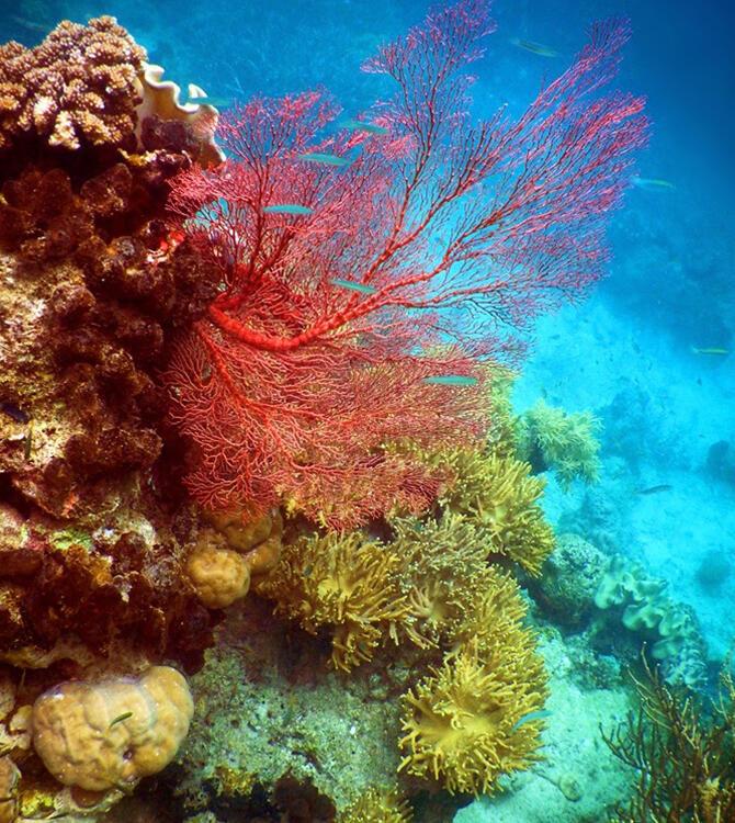 Teluk Saleman, Laut Terjernih di Indonesia, Liat Nih Barang Buktinya