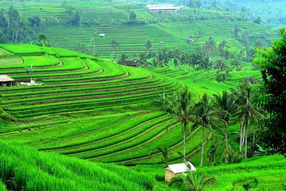 5 Lokasi Shooting Eat Pray Love di Bali Wajib Dikunjungi