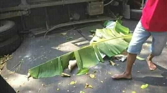 turuck ijo & daun pisang
