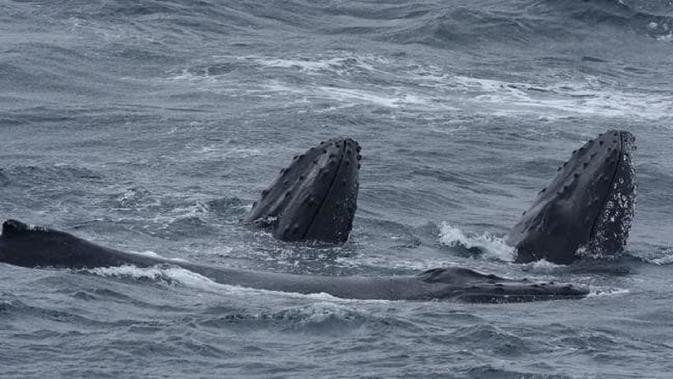 Sains: Ilmuwan Berhasil Menemukan Dunia yang Hilang di Dasar Samudra (Tasmania)