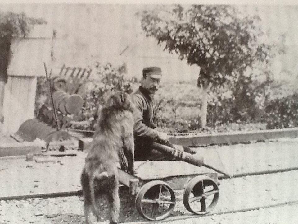 Baboon Yang Bekerja Sempurna Untuk Kereta Api