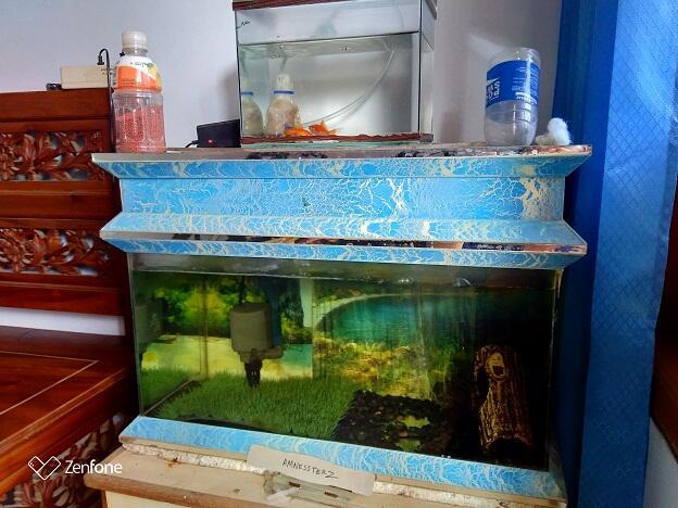 Piara Ikan Mas Koki 5 Ribuan Tapi Awet Kaskus