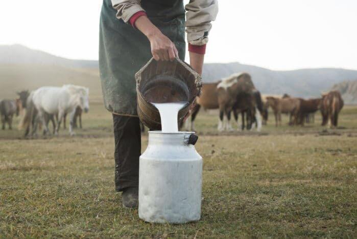 5 Alasan Kenapa Susu Kuda Liar Lebih Sehat Daripada Susu Sapi Biasa (Khas Sumbawa)