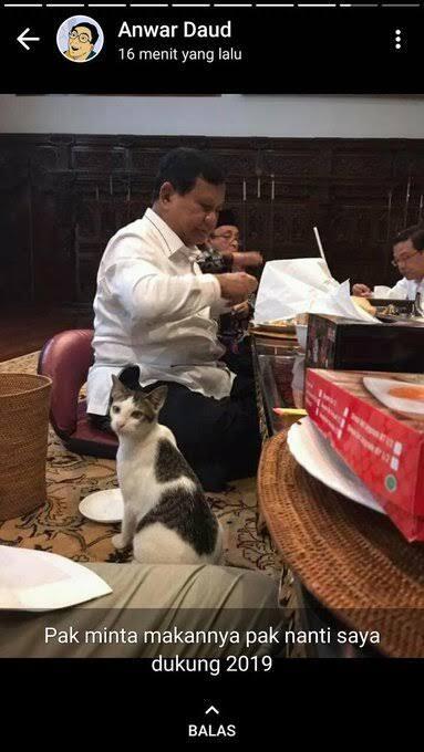 Kucing Kesayangan Prabowo Bikin Netizen Kepincut