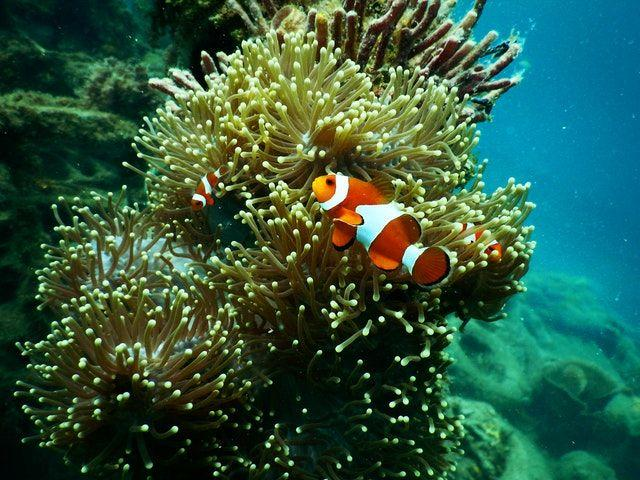 Suka Menyelam? Ini 4 Spot Diving Terbaik di Kawasan Bali Timur
