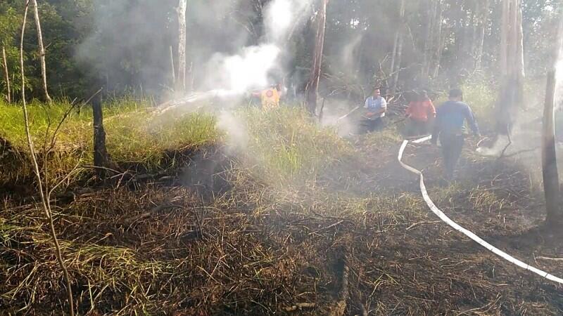 KLHK Minta Pengadilan Segera Eksekusi Perusahaan Perusak Hutan