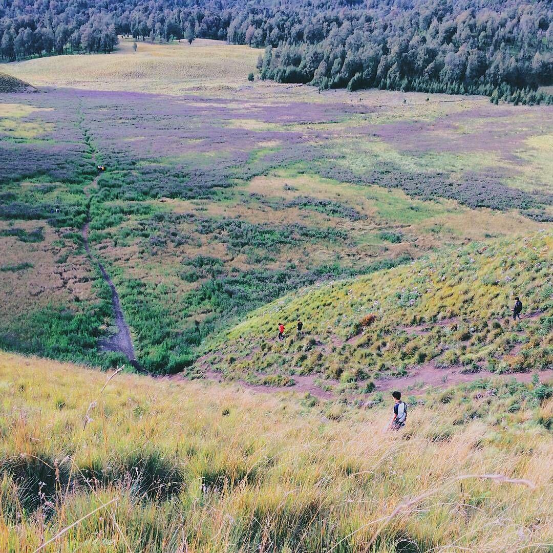 10 Potret Kawasan Taman Nasional Bromo Ini Bikin Kamu Takjub!