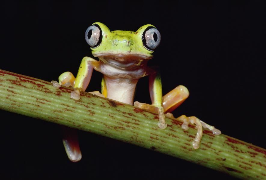 11 Foto Menyedihkan Hewan-hewan yang Terancam Punah, Kasihan Banget