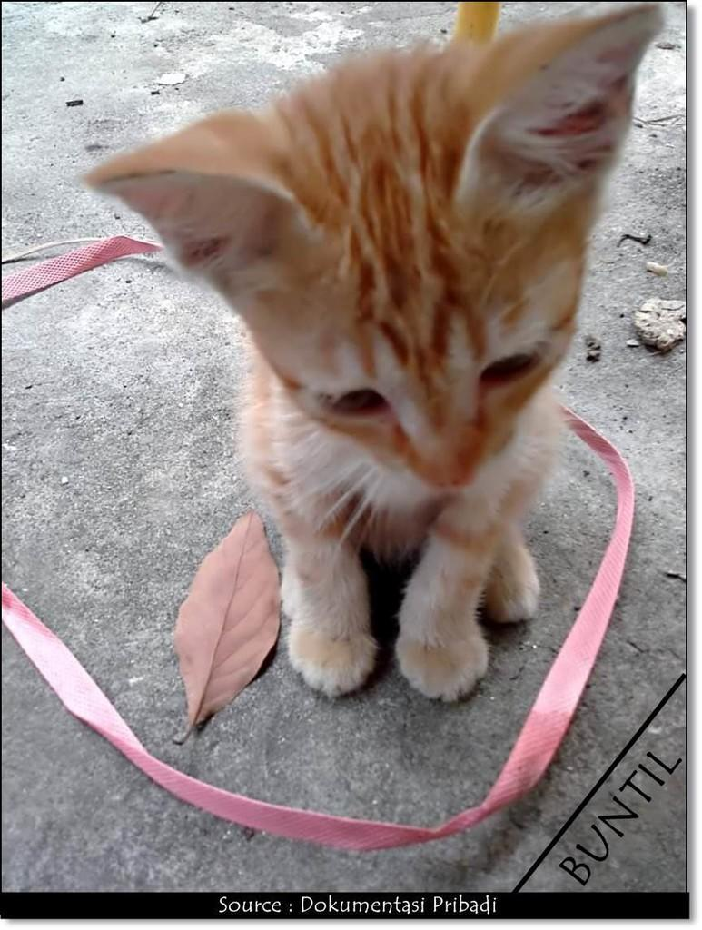 [COC Pets] Cara Ane Merawat Kucing Kampung Layaknya Kucing Ras #AslinyaLo