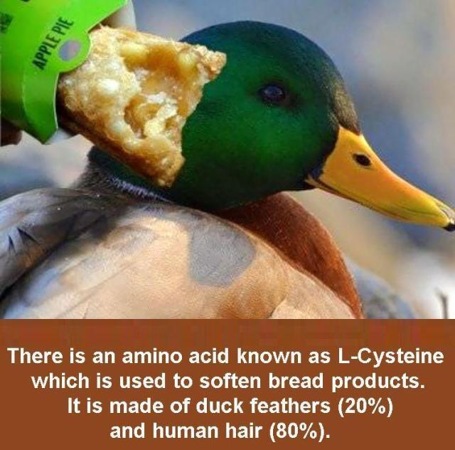 Inilah Bahan Junk Food Yang Selama ini Masuk Ke Perut Anda !