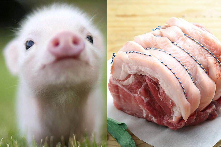 Makan Babi Bahaya atau Gak? Waspadai 7 Penyakit dari Daging Babi Ini!