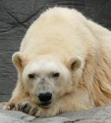 Tahukah Kamu, Ini Binatang Tertua Yang Pernah Hidup di Bumi