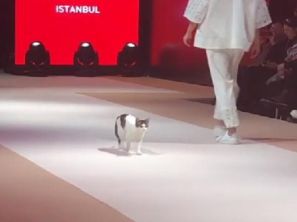 Ini Baru Catwalk, Ada Kucing Ikutan Jadi Model