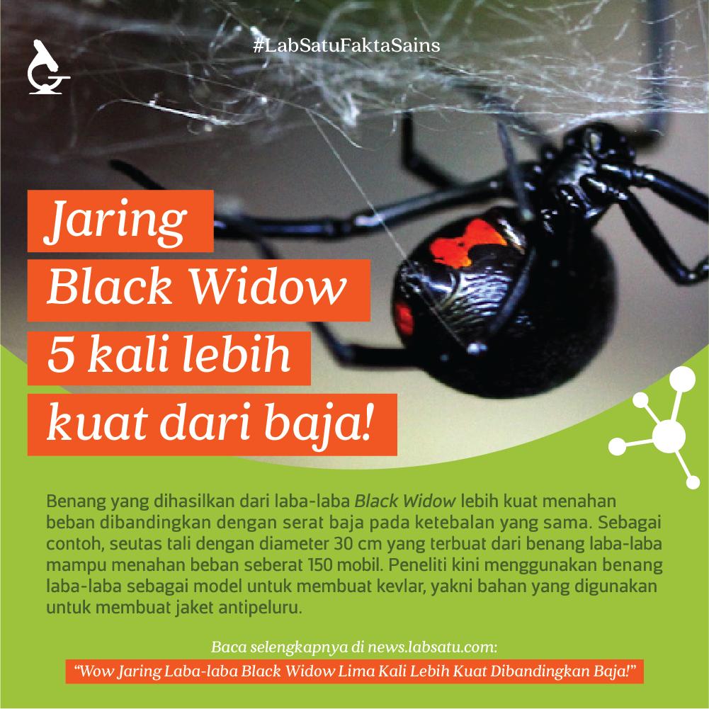 Wow Jaring Laba-laba ini Sekuat Baja !