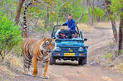Golden triangle india tour package price