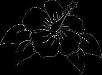 [COC] Wangi & Ampuh Usir Nyamuk, Begini Cara Menanam Bunga Lavender #AslinyaLo