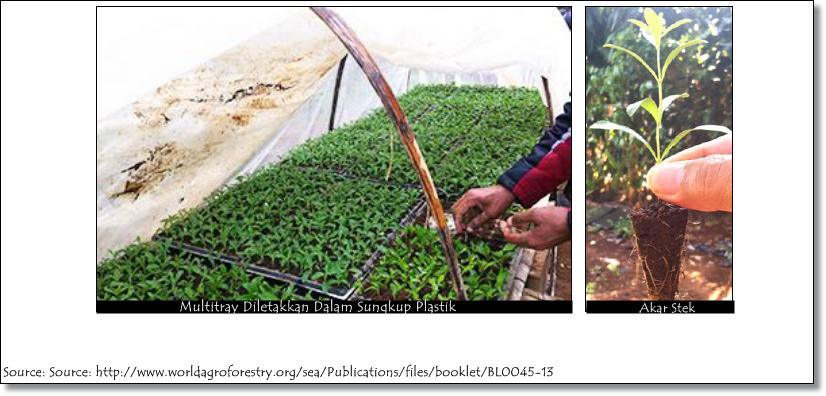 [Event COC] Beberapa Tips dan Teknik Penanaman Stevia #Aslinyalo