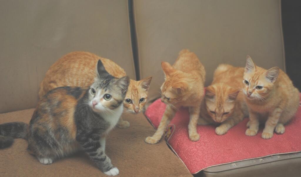 [COC Pets] Tips Pengobatan Homemade buat Kucing
