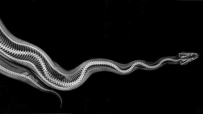 Lewat X-Ray, Kita Bisa Belajar Lebih Banyak Tentang 5 Hewan Seram Ini