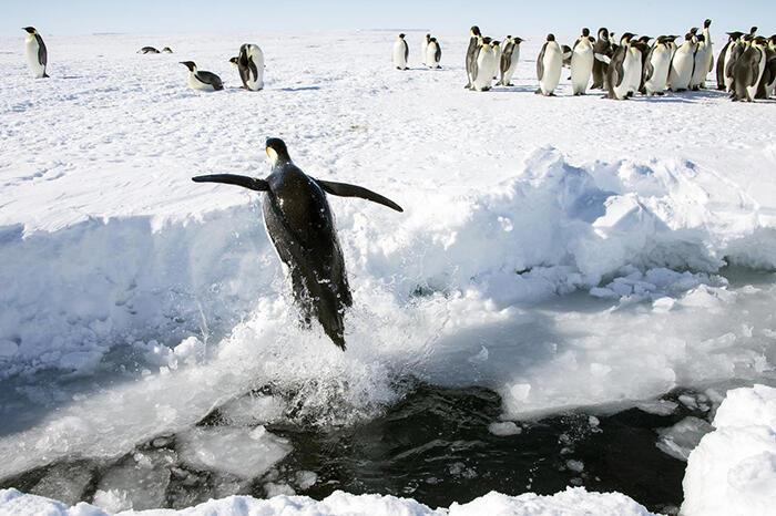Fakta Antartika, Air Terjun Darah hingga Pasangan Tinder