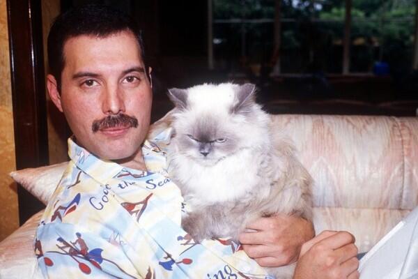 Freddie Mercury dan Kucing-kucingnya: Cinta yang Tak Akan Tergantikan