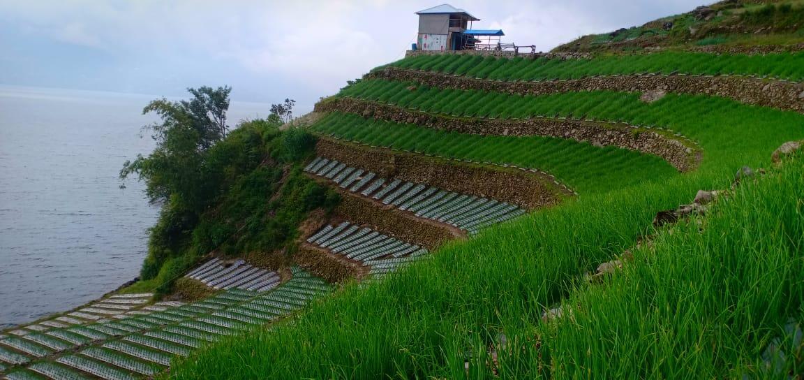 Jaga produk Hortikultura, Kementan Lakukan Adaptasi dan Mitigasi