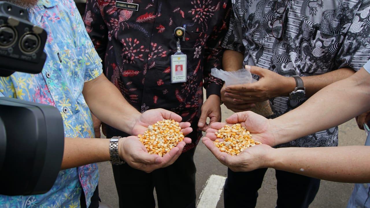 Gerak Cepat Kementan Fasilitasi Distribusi Jagung ke Berbagai Sentra Ayam