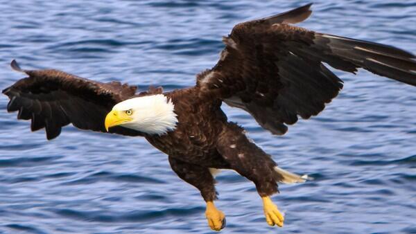 10 Hewan Terkuat di Dunia Ini Gak Perlu Punya Tubuh Tinggi & Besar Lho