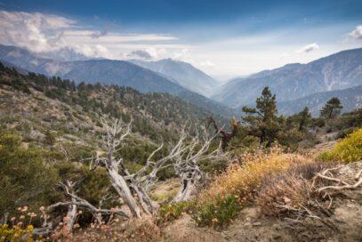 Merinding Time, 5 Hutan Paling Angker Yang Berselimut Misteri di Seluruh Dunia
