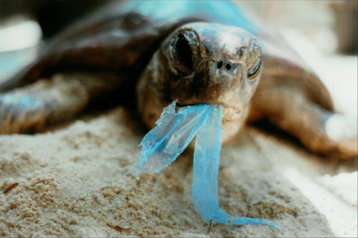 Terbunuhnya Hewan Laut Dengan Plastik