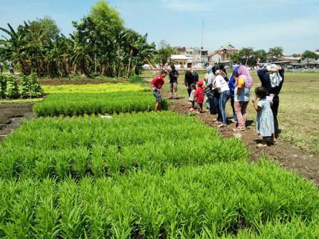 Cipinang Melayu Punya Tempat Wisata Agro dan Edukasi Hortikultura