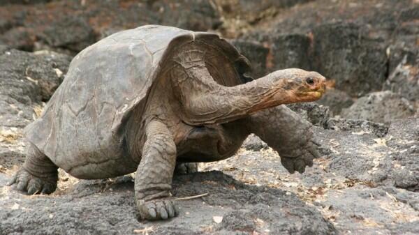 Antara Pemalas atau Memang Pelan, Ini 10 Hewan Paling Lambat di Dunia!