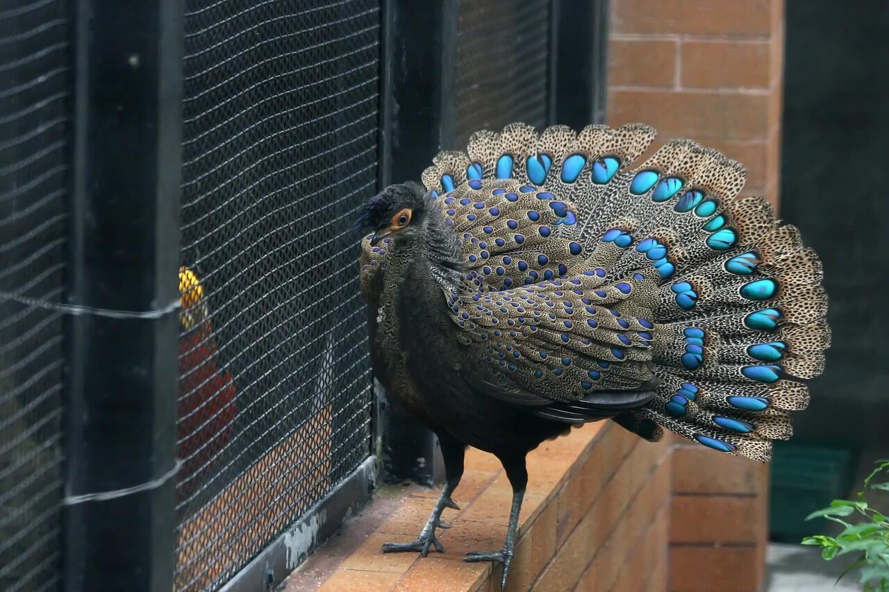 Cantik, Inilah Spesies Burung Yang 11-12 Dengan Burung Merak