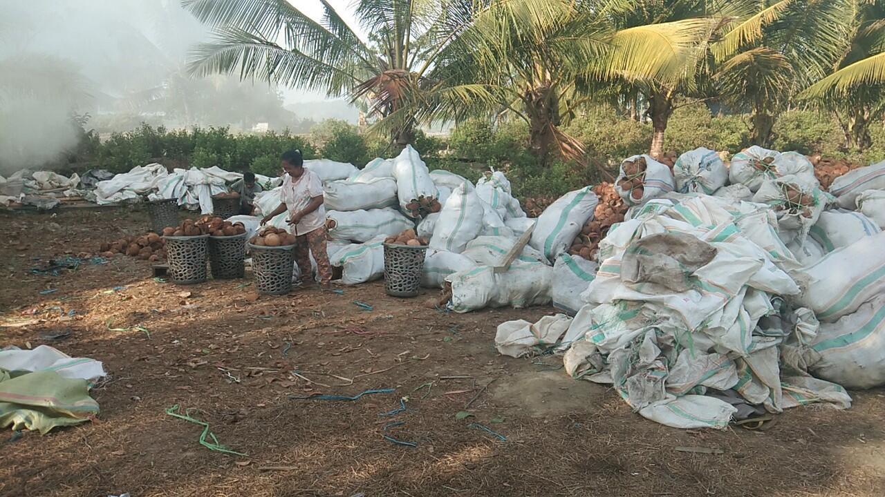 Cari pemodal dan buyer arang batok kelapa